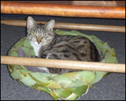 photo of pet basket
